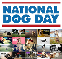 Dog owners across the nation are designing websites dedicated to their dogs.