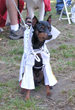 Bark in the Park San Jose Costume Contestant