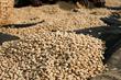 Ethiopian Sidama Guji coffee