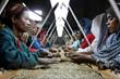 Zero defect sorting of Ethiopian Yirg Z (Yirgacheffe) coffee