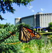 Monarch Butterflies Checking into the Hilton Chicago/Oak Brook Hills Resort & Conference Center