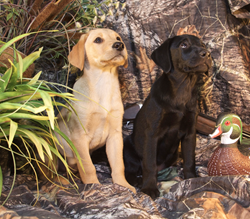 Hunters Creek Retrievers Is Honored to Support the Lone Survivor...