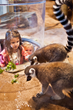 "Bid Farewell to Summer and Our Furry Friends this ""Lemur"" Day Weekend at the South Carolina Aquarium"