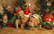 For the blessed, the miracle of a DOG enters your life and exemplifies the love of GOD! www.HuntersCreekRetrievers.com