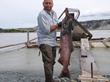 King Salmon Copper River Alaska