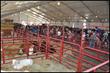 Farm Credit Sponsors Young MacDonald's Farm at the State Fair of Virginia
