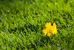 Lawn Seeding With SavATree