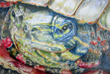 Connecticut Senior Juried Art Show: Honorable Mention in Drawing Category – Sharon C. Malanczuk, age 72, Stafford Springs, CT – Friendly Neighborhood Turtle (Colored Pencil)