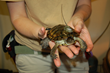 Bay Area Zoos Team Up with Local University to Release Threatened Turtles