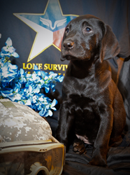 Support an American Hero: Hunters Creek Retrievers Honors Military...