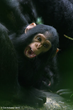 "Oakland Zoo's Conservation Speaker Series Presents, ""Creating Hope for Chimpanzees"""