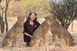 Dr. Laurie Marker with CCF Ambassador Cheetahs