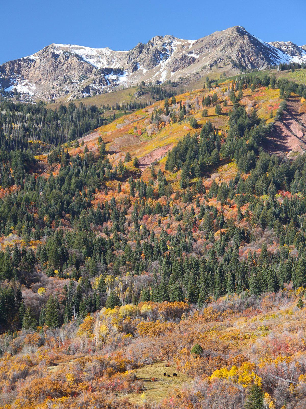 Utah S Premier Ski Recreation Property For Sale