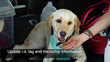 """Emergency Preparedness with Pets"" tip: Update pet identification tags and microchip"