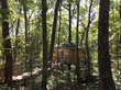 Tree House cabin WV New River Gorge