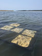 Ceramic 3D-printed oyster proto-reefs in the tide waters of Wellfleet, MA.