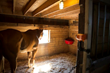 Horse in stall with Journey