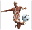 """The Soccer Player"" - one of the figures now on display at the ""Body Worlds"" exhibit  at the Portland Science Center."
