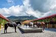 Equestrian Center, Hacienda AltaGracia, Auberge Resorts Collection