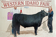 Two Grand Champion Steers Raised on Feed Produced in Meridian, Idaho