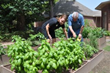 MRC Cornerstone residents harvest more than vegetables from their garden