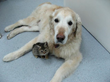 Luka snuggling with a furry friend after the PetPace collar assisted in saving her life.