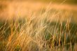 $1M USDA Grant Awarded to The Climate Trust to Build Conservation Investment Fund