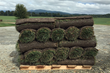 Pallet of Elite Tall Fescue harvested at Super-Sod of Hendersonville