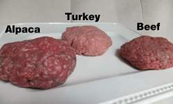 Alpaca, turkey and beef burgers
