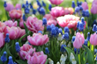6 Tips for Planning a Beautiful Spring Bulb Garden