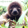 "First Grade Class ""Adopts"" Sloths to Teach About Rainforest Conservation"