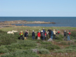 Guests walking with polar bears at Seal River Lodge.