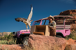 Runnin' W Wildlife Center Partners with Pink Jeep Tours to Release Birds of Prey in Coconino National Forest
