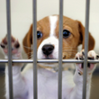 The Golseth Agency and the Humane Society of North Texas Initiate Joint Charity Drive to Rescue Abandoned and Abused Animals