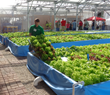 Lettuce grown in Clear Flow Aquaponic Systems® at Nelson and Pade, Inc.®