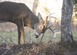 New Deer Deterrent Programs from DeerTech and SavATree