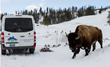 Snowshoes and poles are supplied for a Yellowstone hike and guests travel in style via cozy Mercedes safari vehicle for Wildlife Expeditions March wolves photo safari (photo by Sean Beckett).