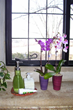 Costa Farms Orchid, Orchid, plants for apartments