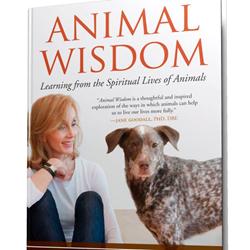 animals, animal healing, animal medicine