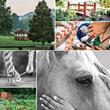 Brookhaven Retreat Announces Redesign Website Launch