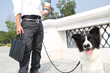 TRONNOVATE announces new pets related products for walking dog - Opets