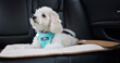Cloudpuff can be used as a pet blanket, carrier liner, car seat cover, or couch cover.