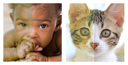 See The Difference Photographers Make - Babies and Pets photo