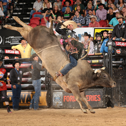 Professional Bull Rider's 2015 Bull of the Year Champion, SweetPro's Long John, owned by D&H Cattle, Page Bulls, Dillon and H.D. Page, Rocking P Ranch.