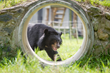Moon bear at Animals Asia Sanctuary