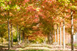 Davey tree, tree care, expert tree care