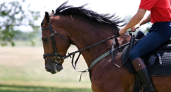 equestrian boot camp