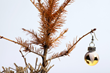 One-third of Californians Surveyed Say Drought Will Impact Their Choice of Christmas Tree