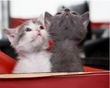 State Farm's Susan Price Geoghegan Announces SpayMart 'Adopt-a-Senior-Pet' Month