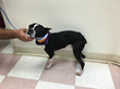 Petpace Collar Instrumental in Weight Loss Management in a Dog